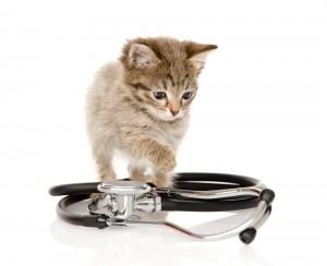 Kitten Plan